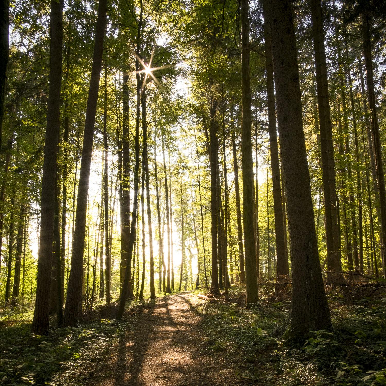 Magischer Wald - photomundo