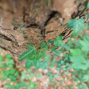 FotoKurs Magischer Wald